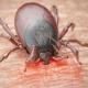Tekenbeet en de ziekte van Lyme